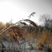 Просто зима :: AleksSPb