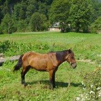 Пасущийся   конь   в    Буковом :: Андрей  Васильевич Коляскин