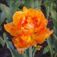 Цветочный костер :: lady v.ekaterina
