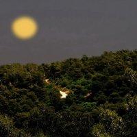 Здесь лунной ночью чудеса рождаются... :: Vanda Kremer