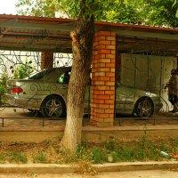 Клетка для авто :: Светлана