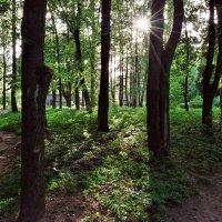 Вечером в парке :: Владимир Филимонов