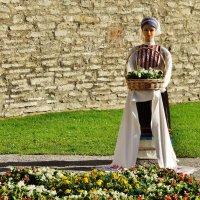 Экспозиция с Фестиваля цветов 2018 в Таллине :: Aida10