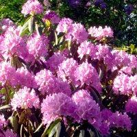Чудесное цветение. :: Лия ☼