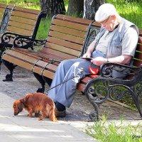 продвинутый пенсионер :: Олег Лукьянов