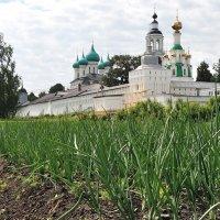 Толгский монастырь, зеленый лучок для монастырской трапезной :: Николай Белавин