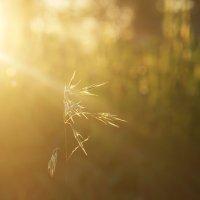 В луче заходящего солнца :: Ирина