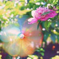 Ветер в саду :: Любовь Потравных