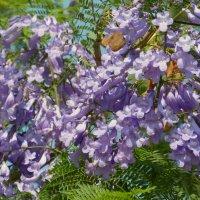 Вот так цветут деревья. :: Пётр Беркун