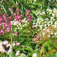 Лютики-цветочки :: Mamatysik Наталья Бурмистрова