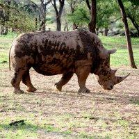 Дикие Животные Африки :: Jakob Gardok