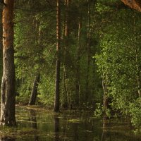 Весенний лес :: Инна *