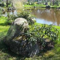 Уголок японского сада в таллинском Кадриорге :: veera (veerra)