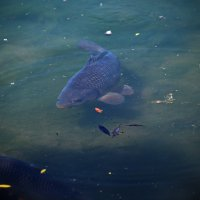 Рыбка плавает по дну ... :: Владимир Икомацких