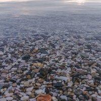 камушки под водой + чистота байкальских вод :: Георгий