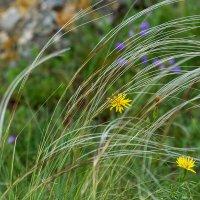 Майские травы :: Игорь Сикорский