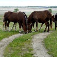 Лошадки что-то нашли... :: Дмитрий Петренко