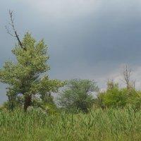 Небо после дождя :: Галина