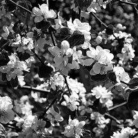 Графика цветения :: san05   Александр Савицкий