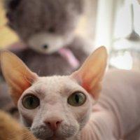 кошка :: Ольга Чазова