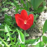 Аленький цветочек :: Дмитрий Никитин