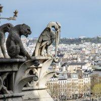 Пеликан в Париже)) :: Наталия Л.