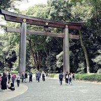 Тории Храма Мэйдзи-дзингу Токио :: Swetlana V