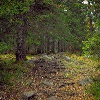 лес :: жанна варфоломеева