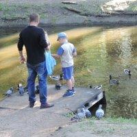 Папа с сыном кормят птиц :: Александр Сапунов