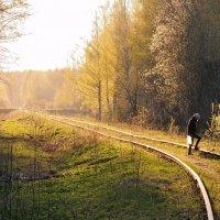Майский закатный вечер, на старой железной дороге :: Николай Белавин