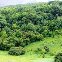 Лес в июне на берегу Дона :: Андрей Лавров
