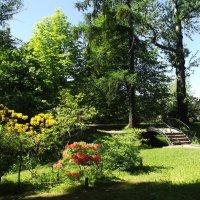 В Ботаническом саду :: Вероника