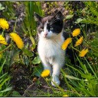 Наш котёнок мир познаёт. :: Валентин Кузьмин