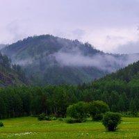 После дождя :: Nikolay Svetin