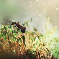 Большая жизнь муравья :: Ира Никина