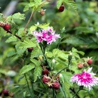 Цветы, ягоды :: Евгений Верзилин