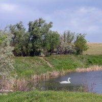 Озеро в Чернавке. :: Анатолий