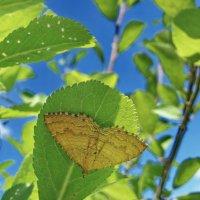 Под листьями :: vodonos241