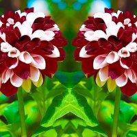 DSC_1133   Цветочная фантазия :: Aleks Minin