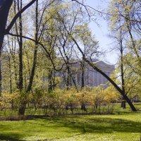 Раннее лето в Питере. В Михайловском саду. :: Лариса (Phinikia) Двойникова