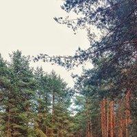 Сказка в лесу :: Алёна Осипова