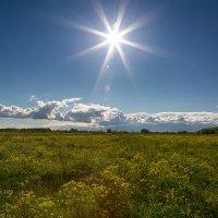 Солнечный пейзаж :: Александр Синдерёв