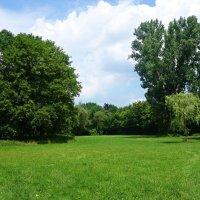...Июнь.., Зелёный праздник для души.... :: Galina Dzubina