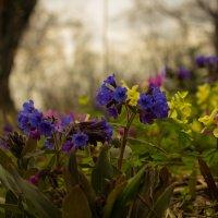 в лесу весеннем, на полянке... :: Ольга Ерохина