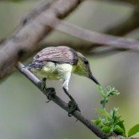 5 см птички :: Oleg