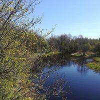 Река Пирита :: veera (veerra)