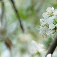 Нежность весны :: Ирина