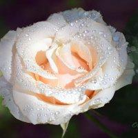 Природная драгоценность :: Тамара Бедай