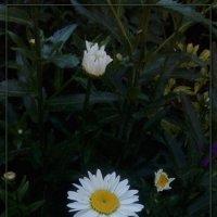 украшение полей ... :: maxim