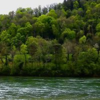 на берегах Рейна :: Александр Корчемный